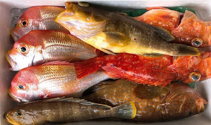 Fresh fish box Fresh fish box (prepped) For Restaurants and Hotels