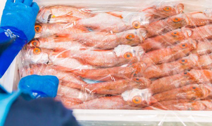 Fresh Fish Export